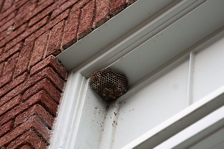 We provide a wasp nest removal service for domestic and commercial properties in Anglesey.